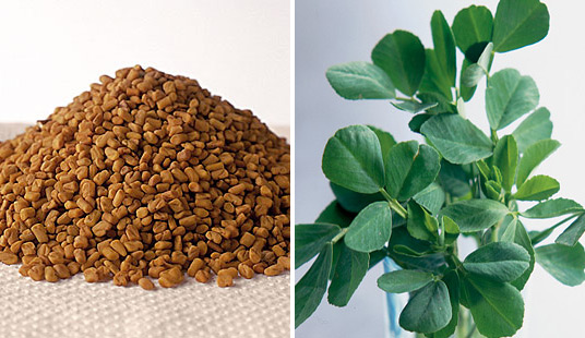 fenugreek seeds and leaves.2