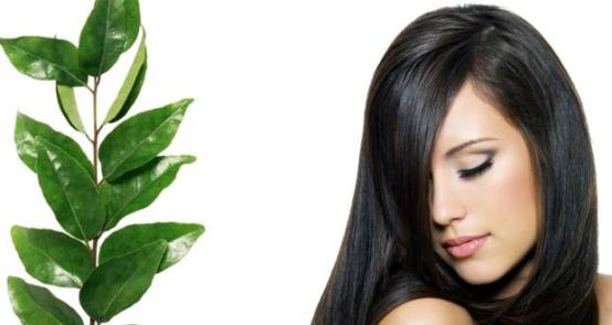 Stop Premature Greying of Hair and Hairfall Naturally with Curry Leaves!