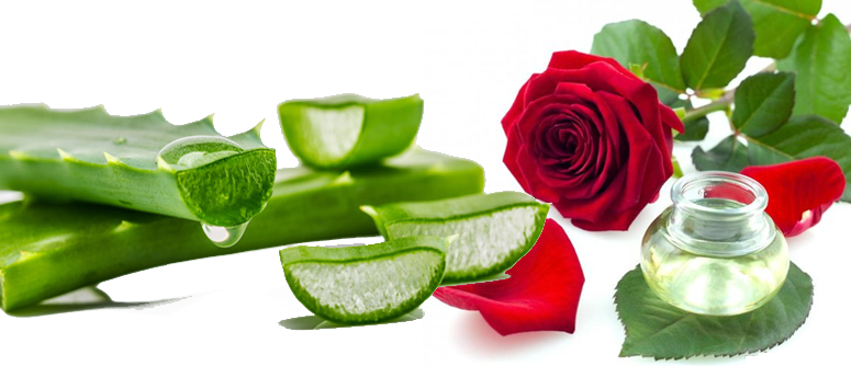 rose water and aloevera juice for dry skin